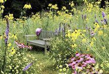 Garden - The Meadow