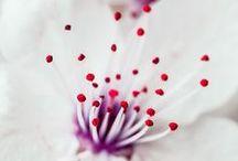 Flores para tu pelo / El jardín botánico de nuestro amor