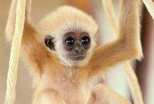cuando sea mayor tendré un mono