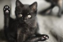 soft-bodied-creature / ^cat^