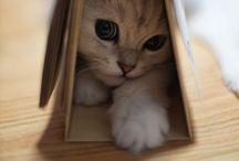 Cats / by Adans Hüber