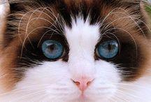 Poody cats / Feline friends