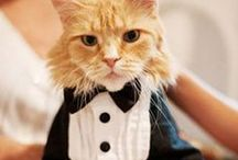 Dapper Cats
