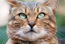 Cats / Lovely, gorgeous and sweet cats