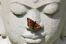 Butterfly-friends / by Györgyi Andrea Kovacs
