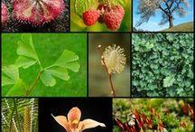 Nature Study: Plants