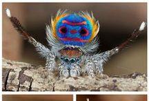 Nature Study: Spiders