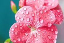 Flowers 1 / My virtual garden