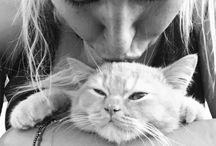 Koty - Cats / Koty - moja puszysta miłość