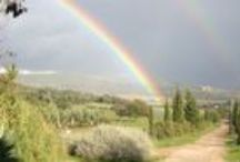 Maremma Tuscany Excellence / wine food, typical food specialities, beautiful weather, landscape