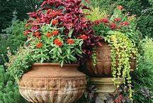 Flower Pots / Great flower pot arrangement ideas.