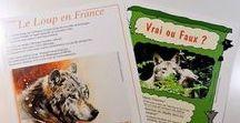 Informations Loup / Toutes les informations au sujet du loup