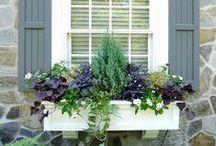 Window Flower Box Ideas