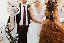 Aimee's beach wedding