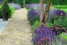 Ogród GARDEN