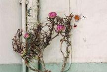 flowers-petaloso