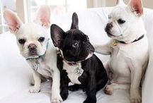 perritos / mascotas es ideal para acompañarte siiiiiii