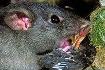 NZ Pest Animals