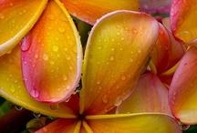 Flowers / by Lori Smith