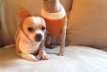 Puppy's / Cute puppy's ❤