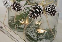 Pine cones / Käpyjä