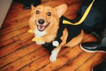 WEDDING PETS / CUTEST Cats | Dogs | Horses |Pets  at Weddings  #weddingpets www.thediyweddingplanner.com
