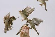Patiaros / Pássaros, passarinhos, bird, patiarinho