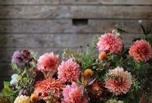 Blumenliebe / Blumen für jeden Tag.
