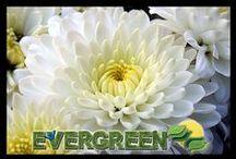 Flores / Tenemos lo mejor que tus flores estén siempre bellas