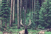 •¥• Nature