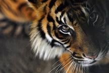 zoo. / by Meredith Birmingham
