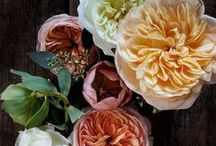 Blooms / just flowers, ways to use them, pretty color combos, etc.