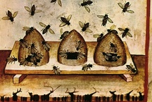 Bee Skeps & Bees / by Diana Preston