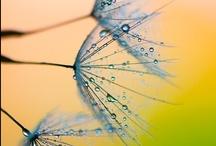 Beautiful things / by Jackie Roberts
