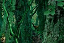 Art Inspiration - Into The Woods / Inspiring images of and related to forests and nature to help inspire my own artwork.   / by Jackie S