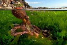 ♥ Sealife ♥ / by M. Myers