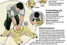 Dog Tips & Goodies