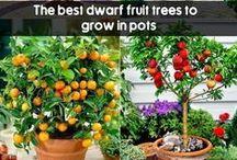 Pot growing veg & fruits