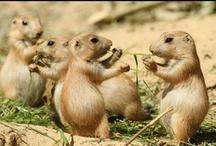 Animales / Animals / Fotos curiosas de animales / Funny pictures of animals
