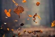 AUTUNNO - fall and its colours