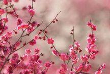 PRIMAVERA - blossoming nature