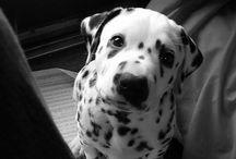 Animals!!!! :* <3