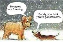 Christmas funnies!