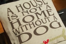 a house is not a home without a dog / All about humans best friend! ♥