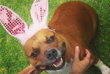 S T A F F I E S / Cute photos of my fav dog breed