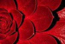 Rojo / #rojo #red #rouge
