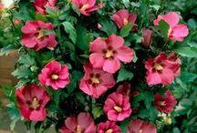 Flower (plants)