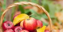 Nature Study | Fall / Charlotte Mason style nature study resources, lessons, activities, topics and ideas for fall.  Learn about: trees & leaves, birds & migration, soil, rocks, preparing for winter, and more...