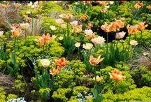 Bunte Blumenbeete / Stimmig komponierte Beete zu allen Jahreszeiten: Stauden, Gehölze wie Rosen und Hortensien, Gräser, Zwiebelblumen
