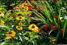 Gelbe Sommerstauden - berlingarten / Der Frischekick im Sommerbeet. Gute Laune garantiert, manchmal aber auch schwer zu kombinieren. Sonnenblumen, Sonnenhut, Sonnenbraut & Co.